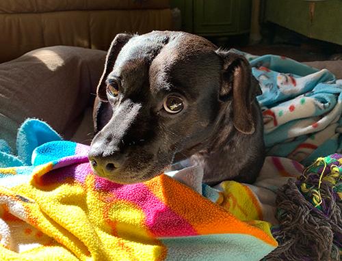 Chula blanket