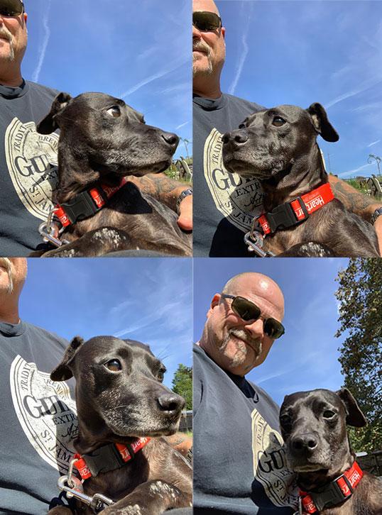 Foster Dog Chula